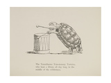 Tortoise Playing a Drum, Nonsense Botany Animals and Other Poems Written and Drawn by Edward Lear Giclee Print by Edward Lear