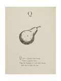 Quince Illustrations and Verses From Nonsense Alphabets Drawn and Written by Edward Lear. Giclee Print by Edward Lear