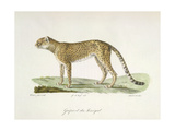 A Cheetah Giclee Print by  Werner