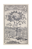 Engraving Of a Group Of Men Picking Apples Giclee Print by Thomas Bewick