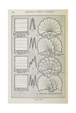 Instructions For Folding a Serviette Into a Fan Shape Giclee Print by Isabella Beeton