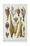 Assorted Game Including Rabbit, Duck, Snipe, Pigeon and Pheasants Giclée-Druck von Isabella Beeton