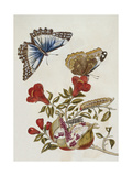 Butterfly and Caterpillar Giclee Print