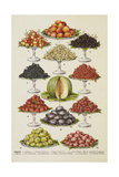 Assorted Fruits Including Melon Giclee Print by Isabella Beeton