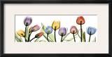 Colorful Tulip Scape Print by Albert Koetsier