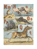 Alphabet: M For Marmot, N For Newfoundland Dog, O For Otter, P For Porcupine and Q For Quagga Giclee Print by Ernest Griset