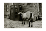 Wild Horse Standing Next To Two Phone Boxes Giclee Print by Fay Godwin