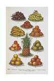 Assorted Fruits Including Pineapple Giclee Print by Isabella Beeton