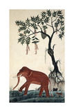 Lady Fruits and Elephant Giclee Print by Bun Khong