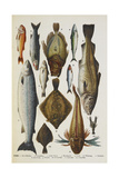 Fish. Including Red Mullet, John Dory, Mackerel, Cod, Salmon, Plaice and Crayfish Giclee Print by Isabella Beeton