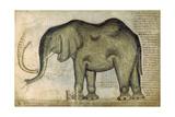 An Elephant Giclee Print