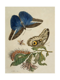 Butterflies and Caterpillar Giclee Print