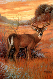 Sunset Deer (Animal) Posters