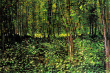 Vincent van Gogh Trees and Undergrowth Forest Poster Prints by Vincent van Gogh