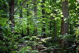 Appalachian Trail Massachusetts Forest Landscape Photo