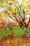 Vincent van Gogh Orchard in Blossom Poster Prints by Vincent van Gogh