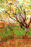 Vincent van Gogh Orchard in Blossom Posters by Vincent van Gogh