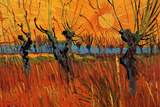 Vincent van Gogh Willows at Sunset Posters by Vincent van Gogh