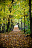 Berkshires Near Appalachian Trail Photo
