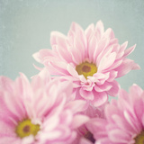 A Dainty Bunch Photographic Print by Susannah Tucker