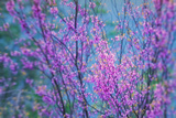 Redbud River Abstract Photographic Print by Vincent James