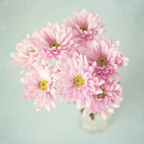 All the Pretty Flowers Photographic Print by Susannah Tucker