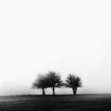3 Trees in Fog Photographic Print by Rory Garforth