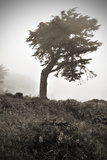 The Bent Tree Photographic Print by Steven Boone