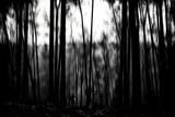 Search in the Woods Photographic Print by Rory Garforth