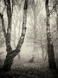 Bracken Woods II Photographic Print by Craig Roberts