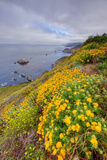 Coastal Flowerscape, Carmel Photographic Print by Vincent James