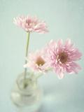 Pretty in Pink Fotografiskt tryck av Susannah Tucker