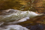 Dogwoods and Late Afternoon Light Reflected in Merced River Photographic Print by Vincent James