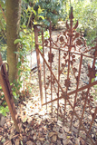 Vintage 1920s Open Gate Leading To Lush Forest Photographic Print by Jena Ardell
