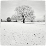 First Snow Photographic Print by Craig Roberts