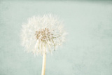 Pale Blue Wishes Fotografisk tryk af Susannah Tucker