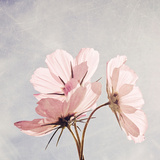 You Are My Pink Sunshine Fotografie-Druck von Susannah Tucker