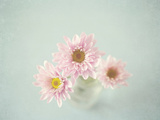 The Loveliest of Days Photographic Print by Susannah Tucker