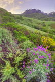 Wildflowers in the Oakland Hills Photographic Print by Vincent James