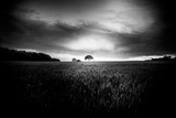 Lone Tree At Deffer Photographic Print by Rory Garforth