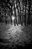 Snow Trees Photographic Print by Rory Garforth