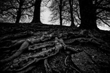 Tree Roots Stretch Out Photographic Print by Rory Garforth