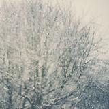 Falling Snow Fotografie-Druck von Laura Evans