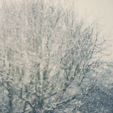 Falling Snow Photographic Print by Laura Evans
