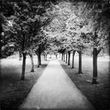 Row of Trees in a Park Photographic Print by Craig Roberts