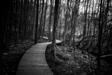Wildwood Path Photographic Print by Rory Garforth