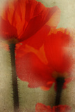 Poppy Sisters Photographic Print by Mia Friedrich