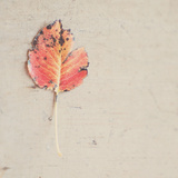 One Red Leaf Photographic Print by Laura Evans