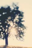 Dreaming of Tomorrows Fotografie-Druck von Laura Evans