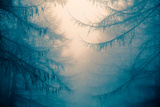 Forest Trees in Fog Photographic Print by Andy Bell